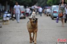 Gato-e-Cachorro-amigos-4