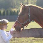 Montar un negocio de equitación para niños