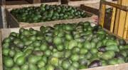¿Cuáles son los productos que mayormente exporta México?