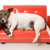 Direct TV lanza un canal exclusivo para perros: DOGTV