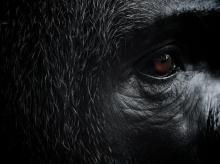 Autor: SAM MORRIS Foto: National Geographic