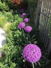 negy-evszak-kerteszet-siofok-bemutato-kert (1)