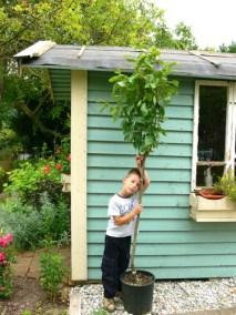 négy-évszak-kertészet-siófok-áruda- (44)
