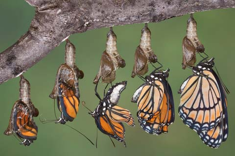 A butterfly changes worlds as it emerges from its chrysalis. So do we when we come to the framework of holiness