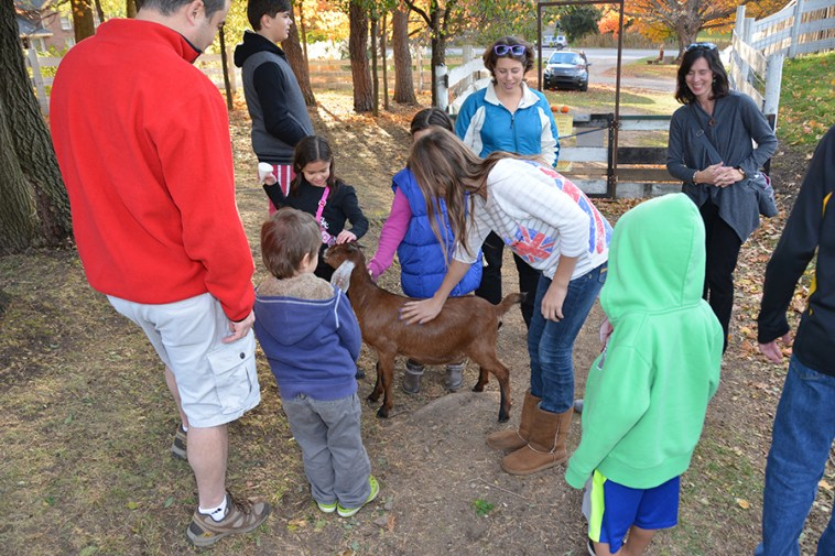 Petting Farm at Rochester Cider Mill.