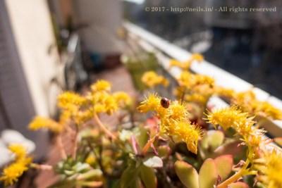 Ladybird on the balcony