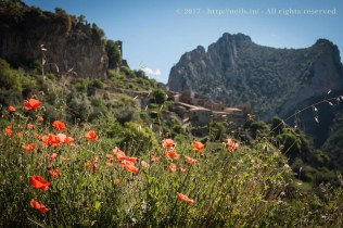 Poppies were the theme of the weekend. Overlooking Abella de la Conca