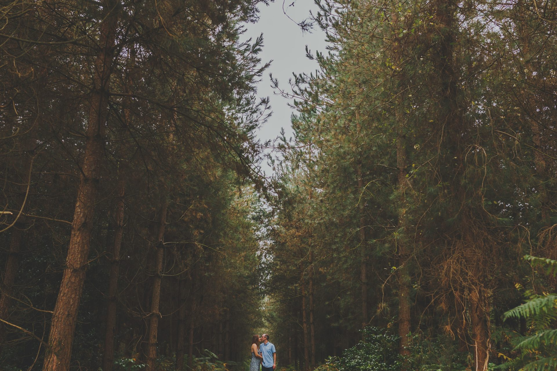 Thetford forest engagement shoot by neil senior photography