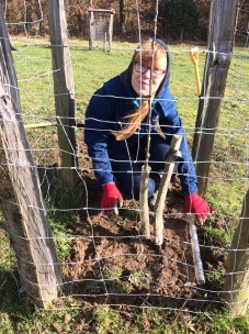 Dominika tree planting