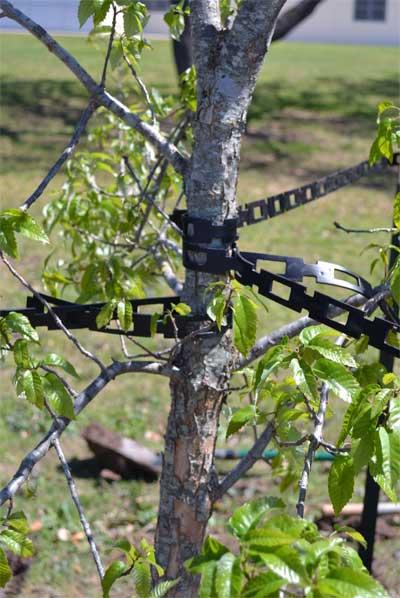 Texas Tree Tips Neil Sperrys GARDENS