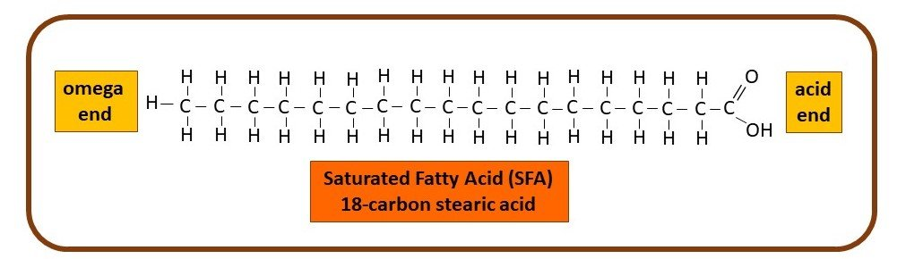 Saturated fatty acid