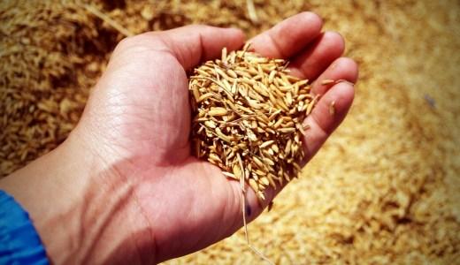 玄米を土鍋で炊く方法【人生を好転させるために食事を整える】