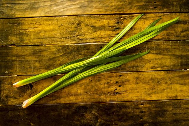 菖蒲湯の菖蒲はどこで買うの?確実に購入するコツと葉菖蒲の保存方法