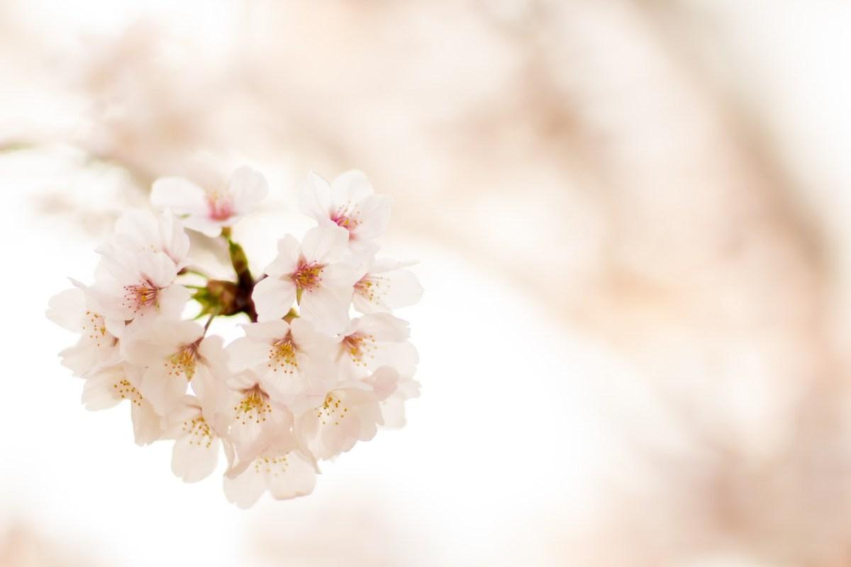 春に気分が憂鬱になるのはなぜ?春うつの症状と意外な原因に要注意!