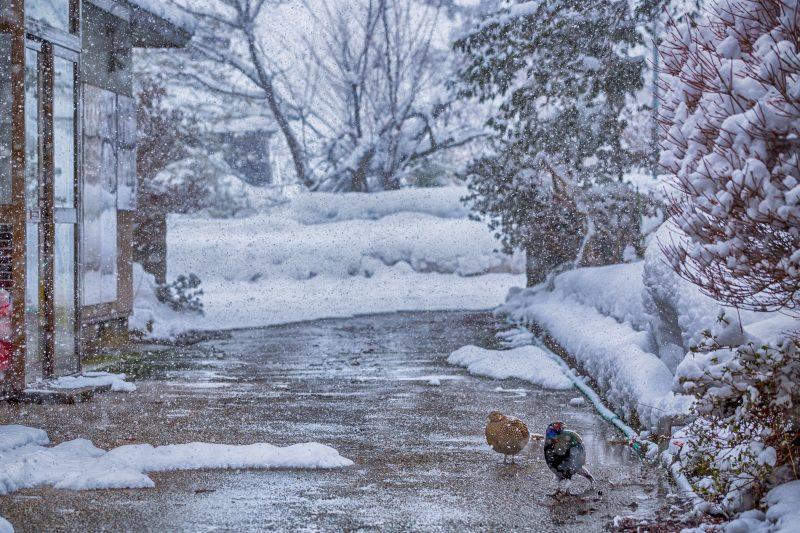 大雪2018はいつ?二十四節気ではどんな季節感?意味や由来を教えて!