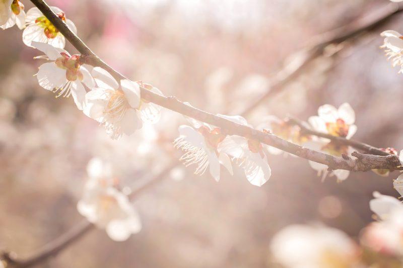 立春の候とはどんな意味?いつまで使える?挨拶と結び例文20選!