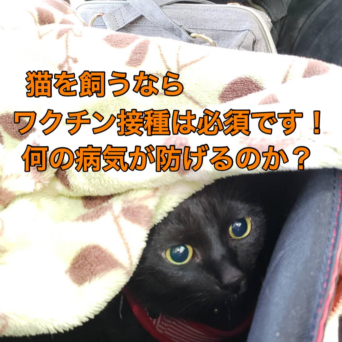 猫を飼うならワクチン接種は必須です!何の病気が防げるのか?