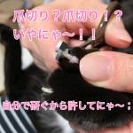 猫の武器!鋭い爪!  爪とぎしてるけど切らないとダメ?