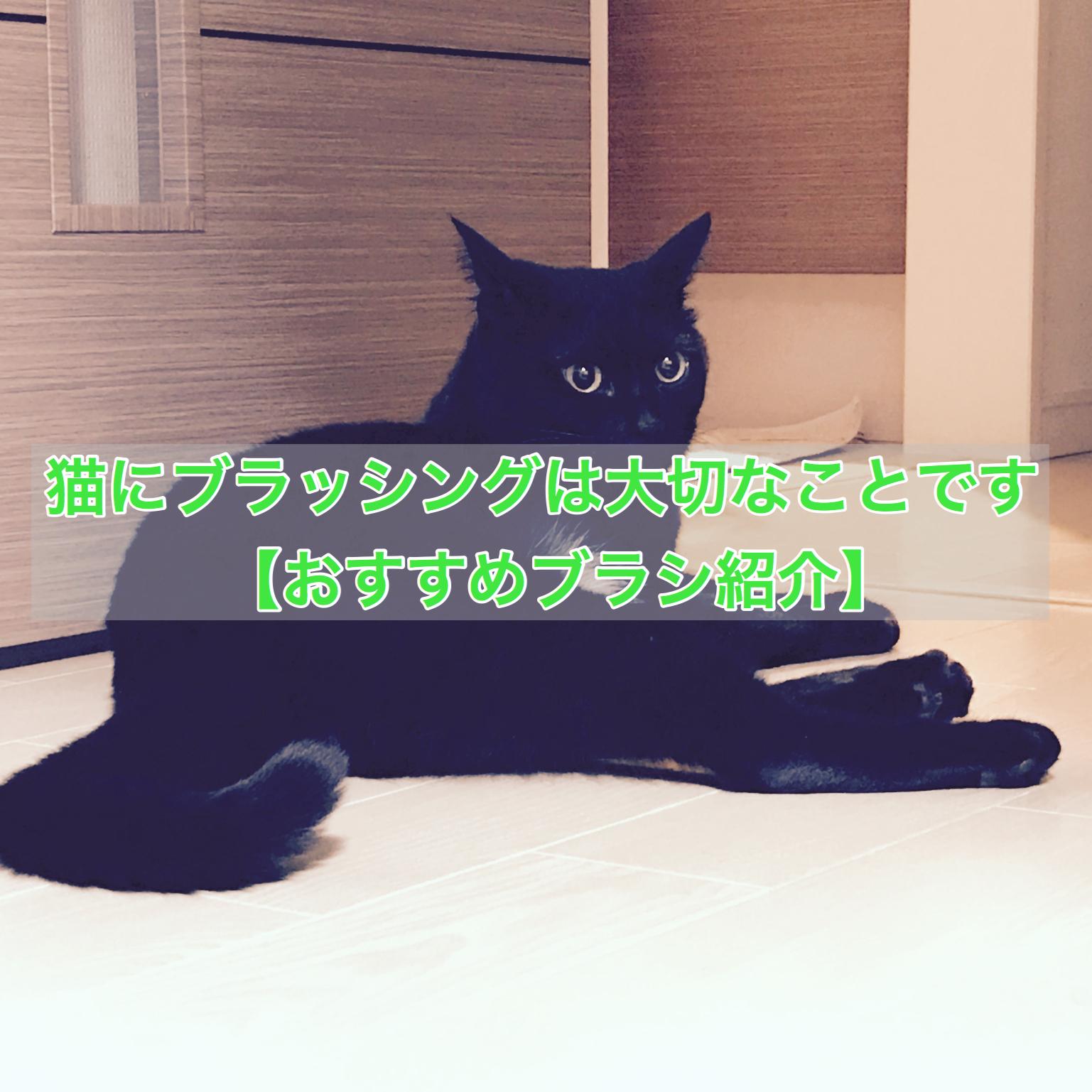 猫にブラッシングは大切なことです【おすすめブラシ紹介】
