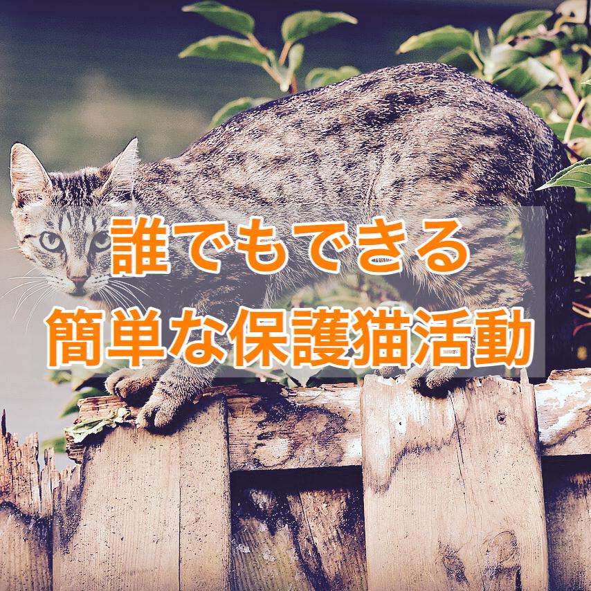 誰でもできる簡単な保護猫活動