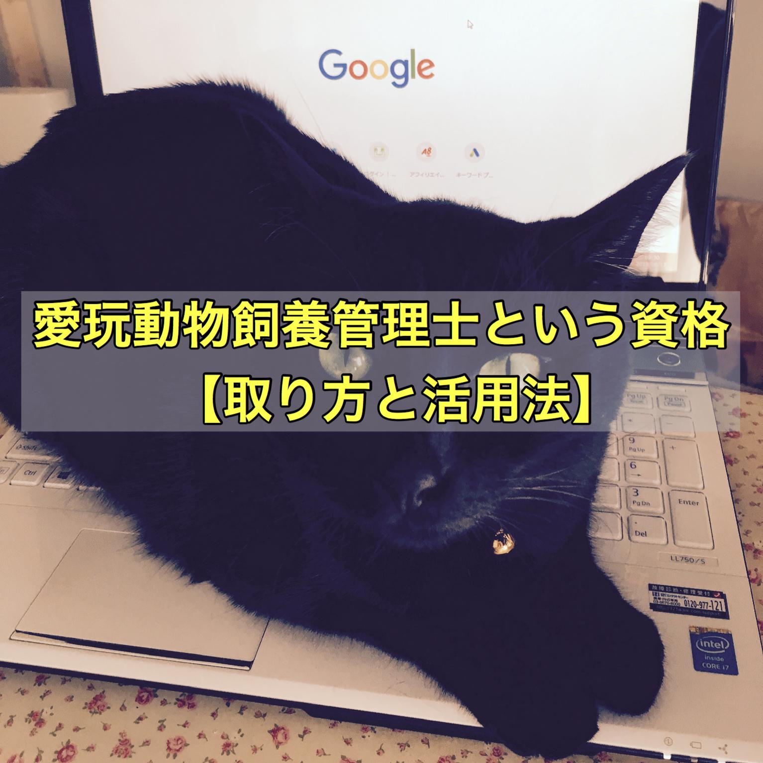愛玩動物飼養管理士という資格【取り方と活用法】