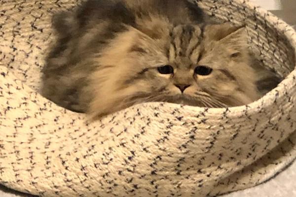 愛猫の体調急変時〜すべきこと〜