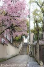春、いつもの坂