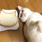 猫、食パン