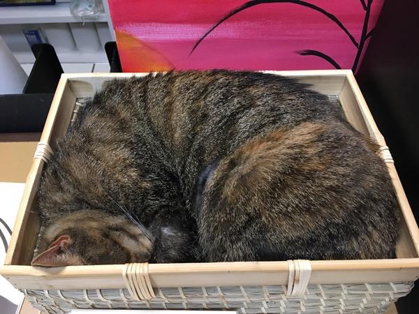 猫カフェ受付