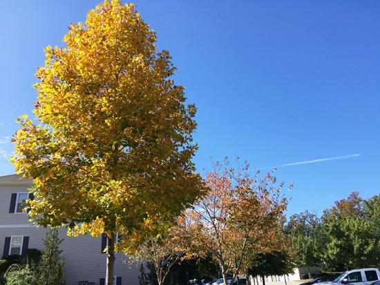 アメリカの秋