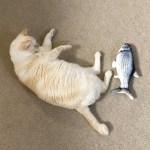 リアルな魚のおもちゃと猫