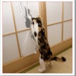 猫が威嚇するポーズや鳴き声は?シャーとされる理由と対処法は?