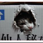 猫の引っ越しは車か飛行機?ストレスを少なく移動する方法!