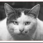 野良猫がなつく簡単な15の方法!なぜ女性や子供は仲良くなれる?