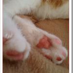 猫の肉球の色がピンクか黒で違う理由は?性格診断もできる?