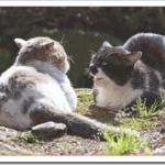野良猫を保護する方法や準備物は?病院の費用はいくらかかる?