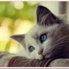 猫の予防接種の料金や時期は?副作用は大丈夫?