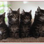 猫エイズは人に感染するか?病状や治療方法は?