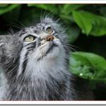 猫が集会をする理由と参加条件や開催時間は?何をしてるの?