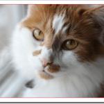 猫にあげてはいけない食べ物や危険性は?好きな物と嫌いな物は何?