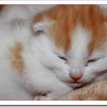 猫の出産直前の前兆や陣痛は?場所の準備とかかる時間は?