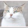猫の知能指数は犬より高い?人間と比較すると何歳くらい?