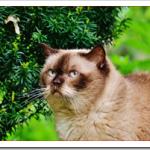 猫の耳掃除を綿棒やティッシュやオイルでする方法や頻度は?