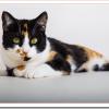 猫のブラッシング頻度や嫌がらないやり方は?抜け毛と静電気対策は?