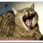 猫の声がかすれて出ない原因や治療法は?喉の病気の可能性は?