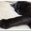 猫の爪切りのコツは?嫌がる暴れるのを抑える方法は?