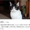 旅猫リポートの猫ナナの種類や年齢、性別は?