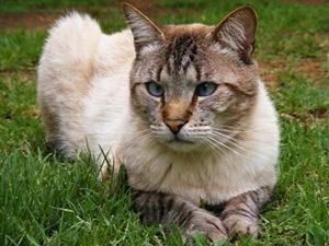 cats-1716232__340