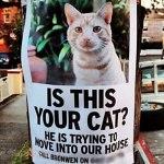 脱走した室内猫の探し方と捕獲方法。押さえておきたい6つのポイントとは?