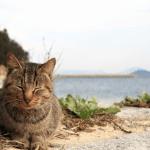 猫の島の善し悪し、香川・男木島 別名猫島の糞尿問題などから考える共存